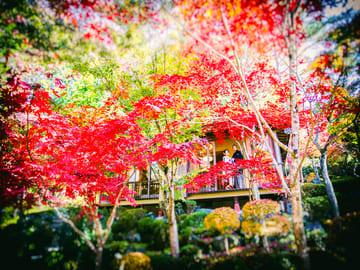 【紅葉和装ロケ受付中】四季折々の景色を楽しめる他にも和室撮影の可能な庭園等…ご希望スタイルにあった庭園をご提案いたします