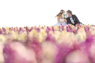 223013_兵庫_季節の花・公園(洋装)