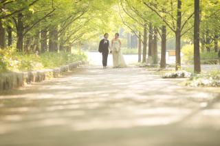 164062_兵庫_季節の花・公園(洋装)
