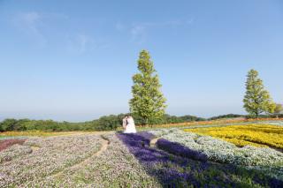 223000_兵庫_季節の花・公園(洋装)