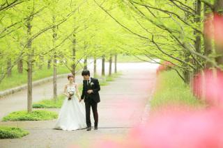 223002_兵庫_季節の花・公園(洋装)