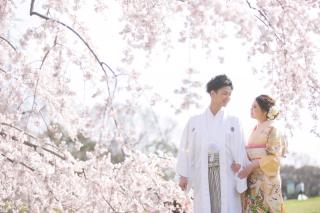 224781_大阪_桜ロケーション(ドレス・和装)