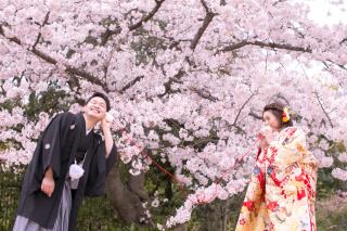 155473_大阪_桜ロケーション(ドレス・和装)