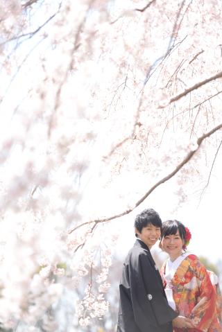 155469_大阪_桜ロケーション(ドレス・和装)