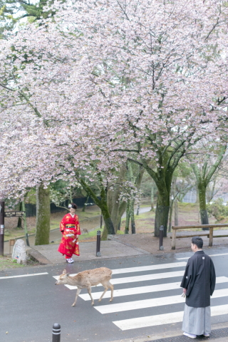 155475_奈良_桜ロケーション(ドレス・和装)