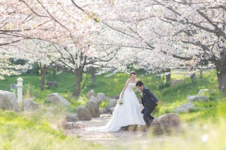 155467_大阪_桜ロケーション(ドレス・和装)