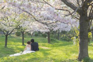 155468_大阪_桜ロケーション(ドレス・和装)