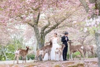 224773_大阪_桜ロケーション(ドレス・和装)