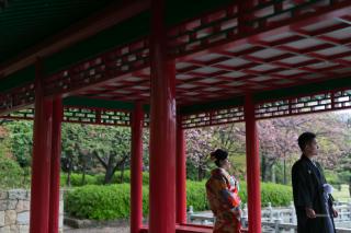 155477_大阪_桜ロケーション(ドレス・和装)