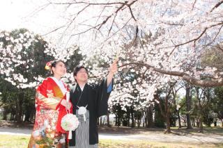 70163_埼玉_ロケーションフォト 桜フォト