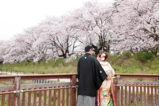 71306_埼玉_ロケーションフォト 桜フォト