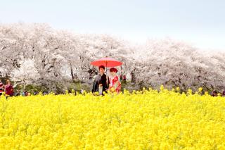 3329_埼玉_ロケーションフォト 桜フォト