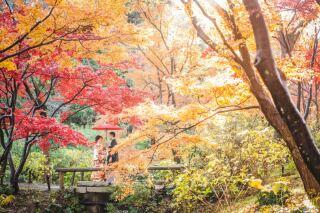 392803_神奈川_ベストショット PhotoJellish
