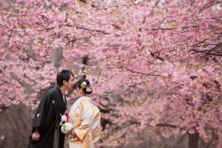 63376_東京_桜&菜の花のフォトウエディング