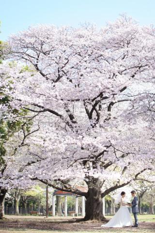 63361_東京_春のロケーション