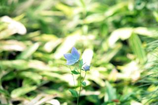 196717_東京_庭園フォト 6月