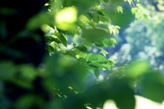 196705_東京_庭園フォト 6月