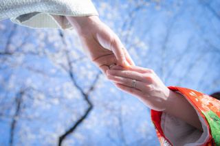 264327_愛知_桜/紅葉
