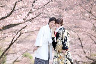 158349_愛知_桜/紅葉