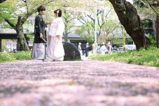 159242_愛知_桜/紅葉