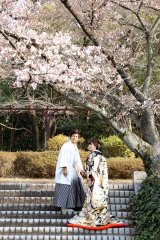 158350_愛知_桜/紅葉