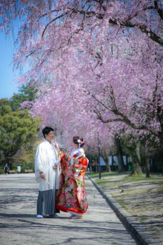 264326_愛知_桜/紅葉