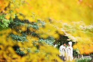 158952_愛知_桜/紅葉