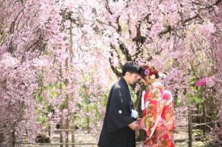 -SAKURA- 桜プラン