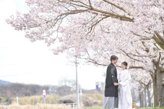 249657_茨城_【もうすぐこの季節】桜ロケーション