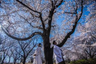 249677_茨城_【もうすぐこの季節】桜ロケーション