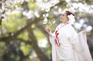 249661_茨城_【もうすぐこの季節】桜ロケーション