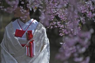 249652_茨城_【もうすぐこの季節】桜ロケーション