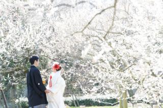 249665_茨城_【もうすぐこの季節】桜ロケーション