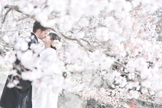 249656_茨城_【もうすぐこの季節】桜ロケーション