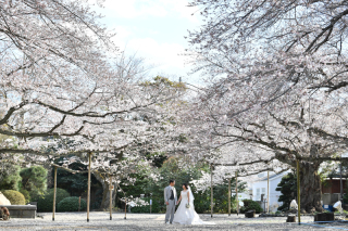 249672_茨城_【もうすぐこの季節】桜ロケーション