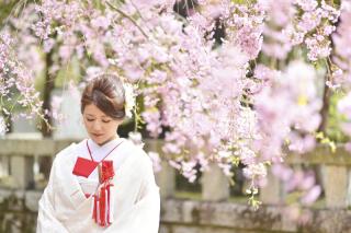 249680_茨城_【もうすぐこの季節】桜ロケーション