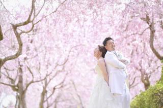 249654_茨城_【もうすぐこの季節】桜ロケーション