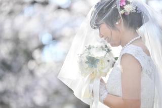 249669_茨城_【もうすぐこの季節】桜ロケーション