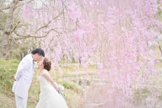 249653_茨城_【もうすぐこの季節】桜ロケーション