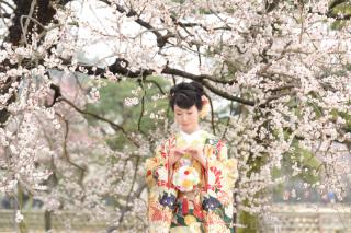 249666_茨城_【もうすぐこの季節】桜ロケーション