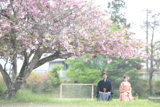 249664_茨城_【もうすぐこの季節】桜ロケーション