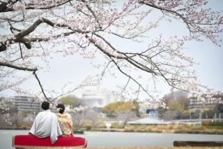 249660_茨城_【もうすぐこの季節】桜ロケーション