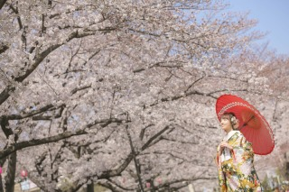 248670_東京_桜ロケーション