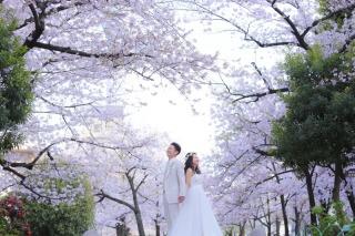 248653_東京_桜ロケーション