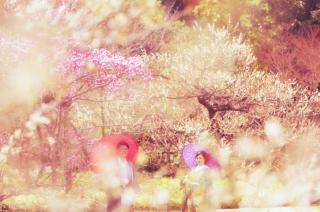 17468_愛知_徳川園