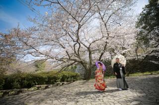 295475_福岡_はる、桜♪ロケーション撮影