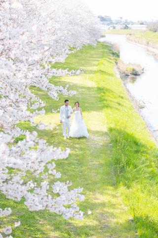 295494_福岡_はる、桜♪ロケーション撮影