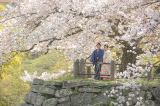295472_福岡_はる、桜♪ロケーション撮影