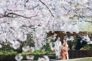 295484_福岡_はる、桜♪ロケーション撮影