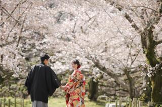 295476_福岡_はる、桜♪ロケーション撮影
